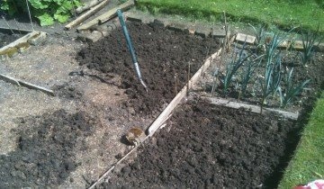 Глубоко перекопайте грядку и взрыхлите почву