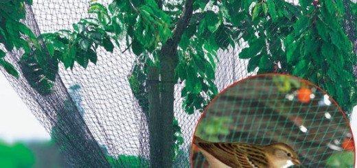 Защита от птиц, www.vashsad.ua