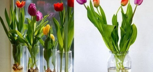 Тюльпаны растут в воде