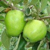 зимнее лимонное