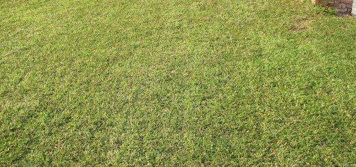 Скошенная трава на газоне