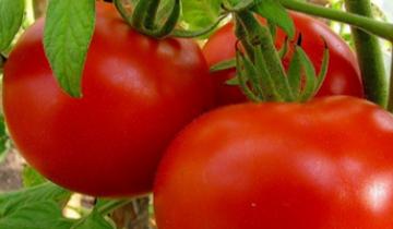 Как сажать помидоры —  секреты, которых вы еще не знаете