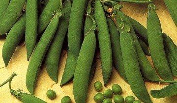 Горох овощной ( Pisum sativum L. ), сорт Воронежский зеленый