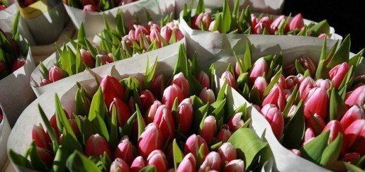 Срезанные тюльпаны, talusha.3bb.ru