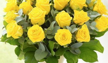 Розы не любят яркий свет, flemingflorist.ie