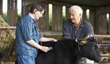 Как вылечить мастит у коров и другие не менее неприятные заболевания – советы опытных ветеринаров