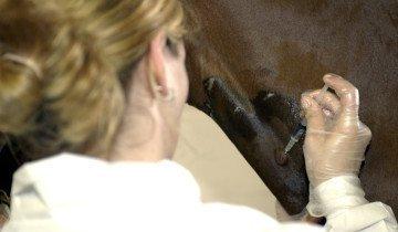 Инъекция спазмолитического препарата лошади, cdn.thehorse.com