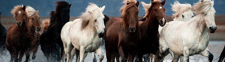 Виды сверху нескольких лошадей, daypic.ru