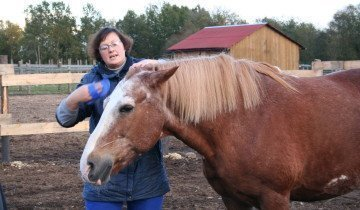 Чистка лошади, rashel.spb.ru