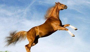 Чем опасны болезни лошадей  и  как с ними бороться?