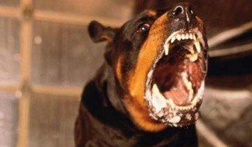 Больная бешенством собака, unise.ru