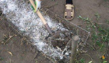 Удобрение почвы суперфосфатом, 7dach.ru