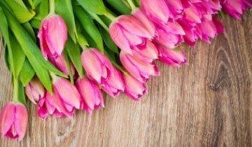 Как правильно сажать тюльпаны и на какую глубину их закапывать или почему соседи вам будут завидовать?