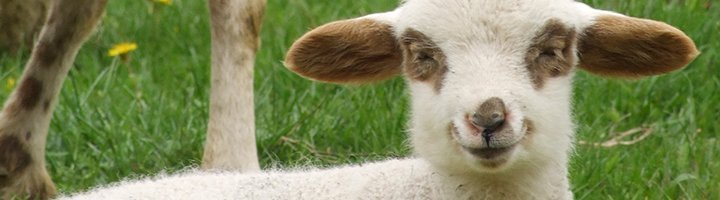 Маленькая овечка, canvasprint.nl