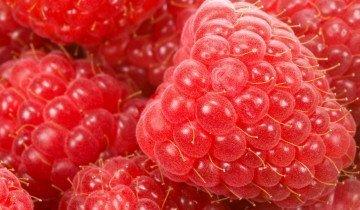 Плоды ягоды малины