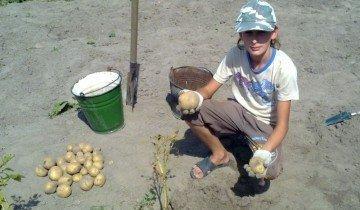 Подготовка почвы под картофель, derevnyaonline.ru