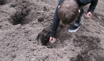 Подготовка картофеля к посадке, bp.blogspot.com