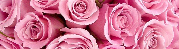 Розовые розы, bestimagehosting.net