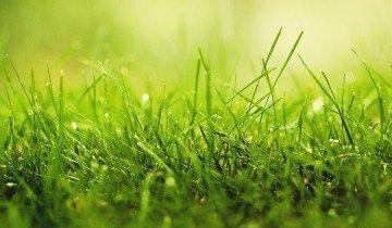 Проросшая смесь трав для газона