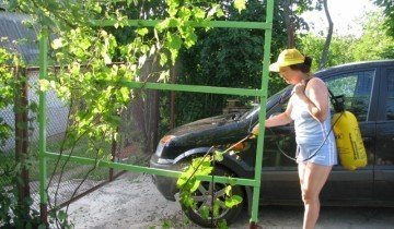 Опрыскивание винограда, img-fotki.yandex.ru