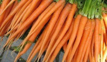 Полезность моркови