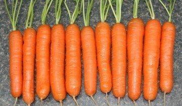 Полезна ли морковь