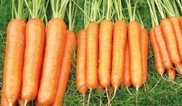 Сочная морковка