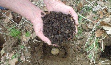 Удобрение при посадке картофеля, bp.blogspot.com