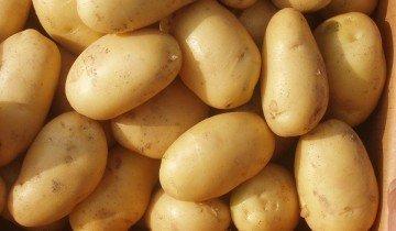 Выращиваем картофель, agriculturesource.com