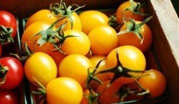 Желтые помидоры — особенности и характеристики сортов