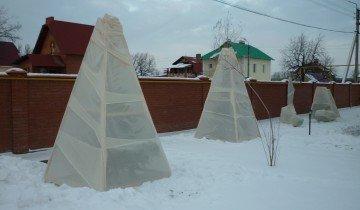Укрывание сосны на зиму, greenmarket.kz