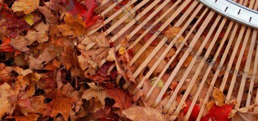 Уборка газона от листьев и отходов, 7dach.ru