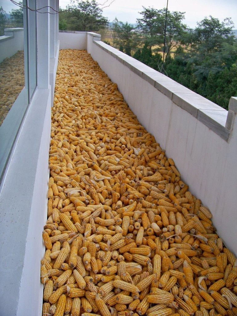 Как хранить зерно в домашним условиях