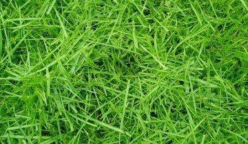 Трава на корм