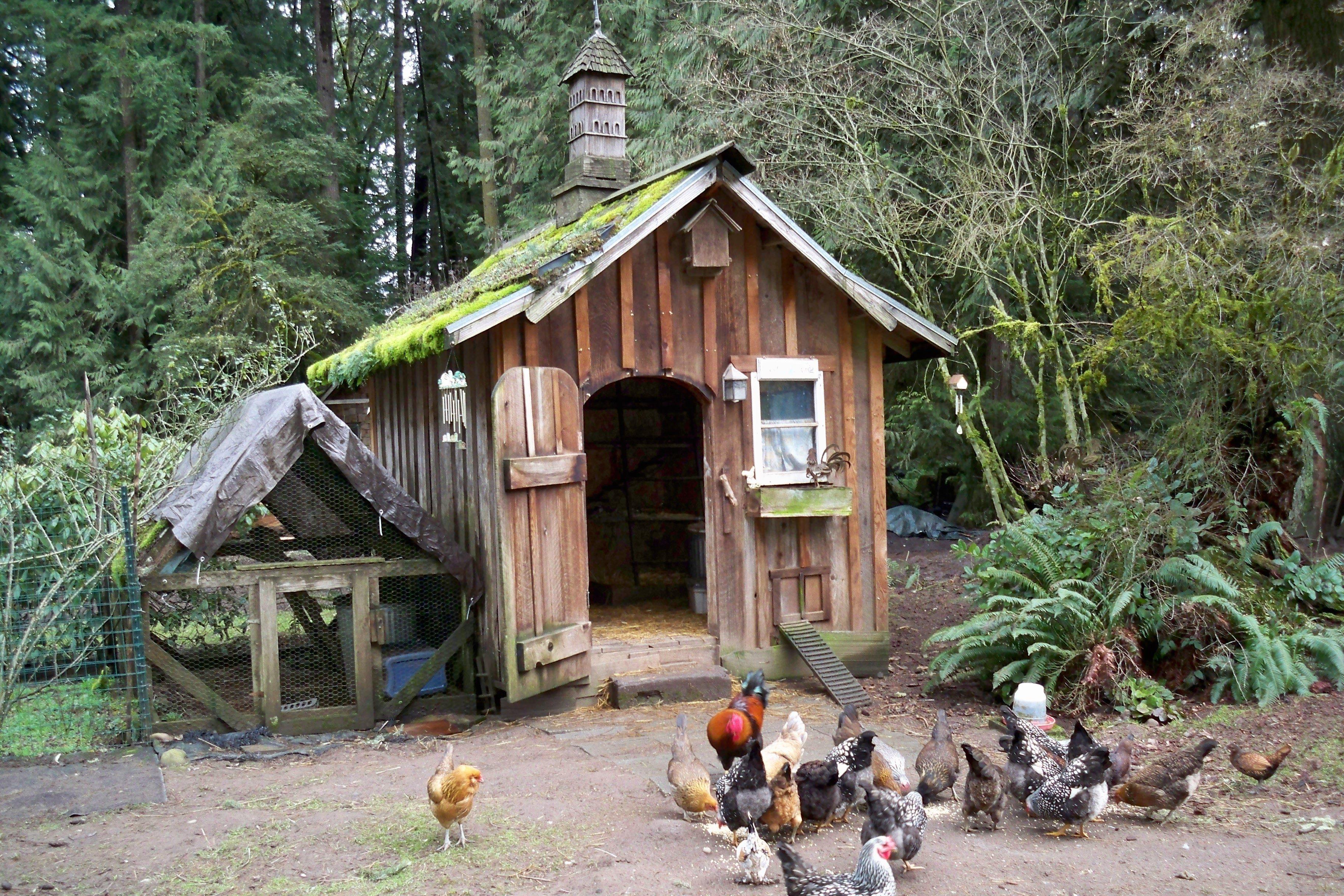 Занялись мы постройкой курятника.  Сначала хотели в сарае курообиталище организовать...