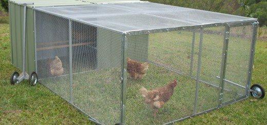 Клетка для цыплят фото