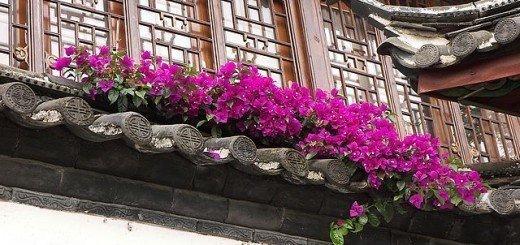 Красная петуния на балконе, thelovelyplants.com