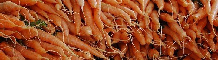 Морковка, agrobk.ru