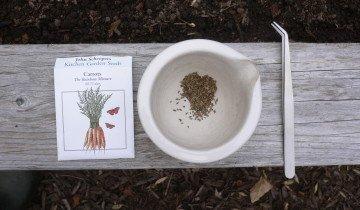 Семена моркови готовые к посадке, gardenengineer.files.wordpress.com