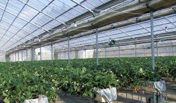 На фото вертикальные грядки в теплице, ic.pics.livejournal.com