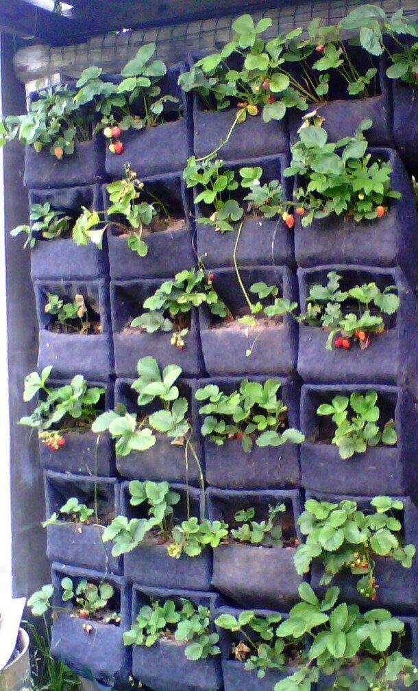 Вертикальная клубника выращивание 91