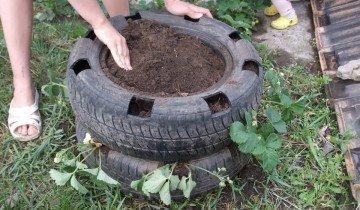 Изображение посадки клубники в шину, h-a.d-cd.net