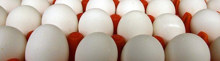 Куриные яйца, agrobk.ru