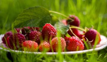 Как обрезать малину осенью, чтобы получить в два раза больше урожая
