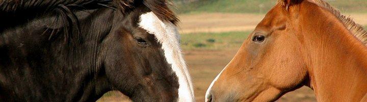Две лошади, picsdesktop.com