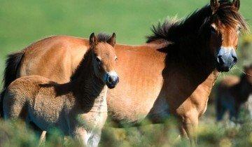 На фото лошадь с жеребенком, megalife.com.ua