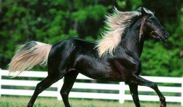 Изображение черной лошади, s1.hostingkartinok.com