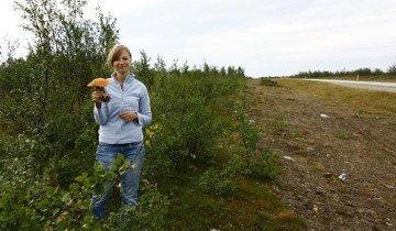 Изображение гриба найденного у дороги, awd.ru