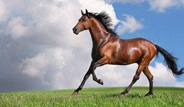 В помощь начинающему коневоду — как рожают лошади и возможные осложнения беременности