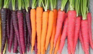 На фото разные сорта моркови, rosiegarner.com